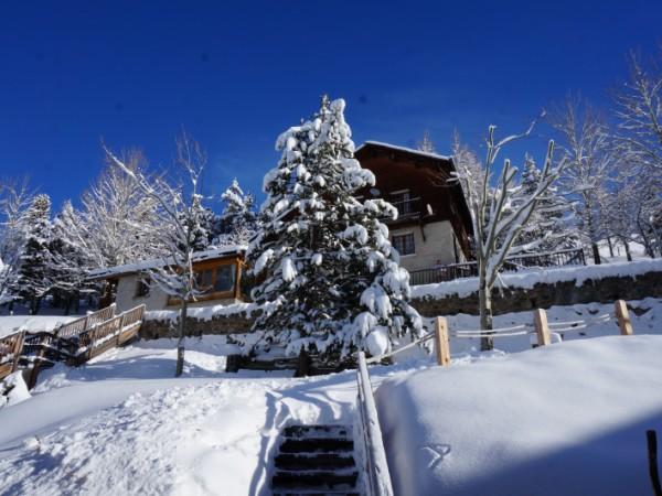 Jardin l'hiver